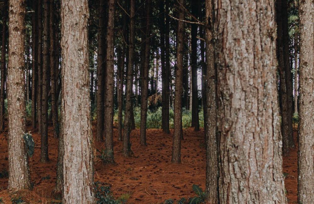 Steigerhouten meubelen zijn trendy